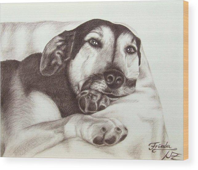 Dog Wood Print featuring the drawing Shepherd Dog Frieda by Nicole Zeug