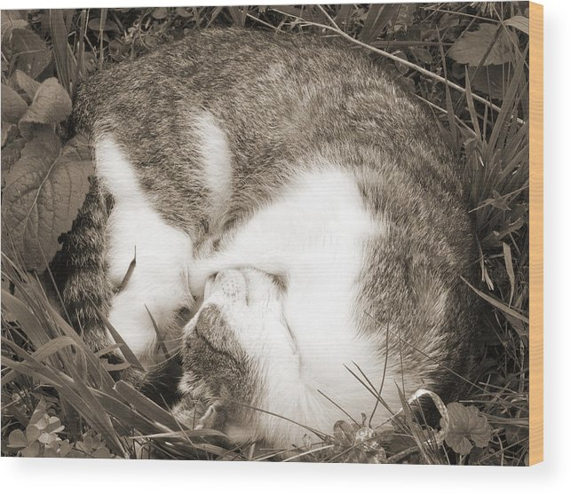 Pets Wood Print featuring the photograph Sleeping by Daniel Csoka