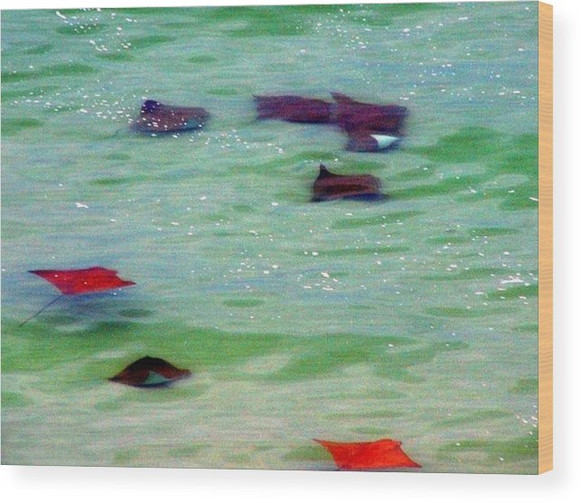 Sting Rays Wood Print featuring the digital art Sting Rays by Kenna Westerman