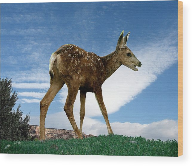 Animals Wood Print featuring the digital art Summer Fawn by Deborah Hurley