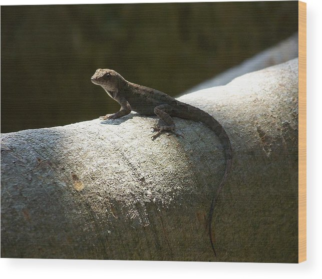 Lizards Wood Print featuring the photograph The Lone Lizard by Amanda Vouglas