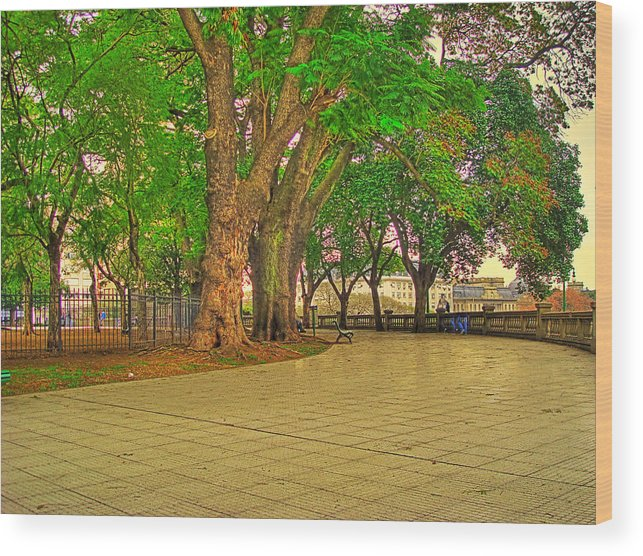 Trees Wood Print featuring the photograph The Park by Francisco Colon