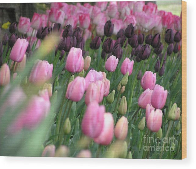 Tulips Wood Print featuring the photograph Tulip Dreams by Louise Magno
