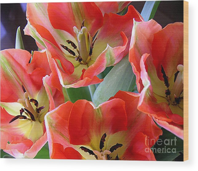 Nature Wood Print featuring the photograph Tulips - Competing For Attention by Lucyna A M Green