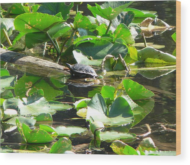 I Captured This Turtle Sunning Himself At Champion Lake Wood Print featuring the photograph Turtle Town by Patty Leclerc