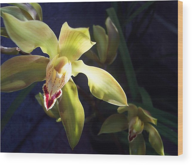 Yellow Wood Print featuring the photograph Yellow Cymbidium And Shadows by Jean Booth