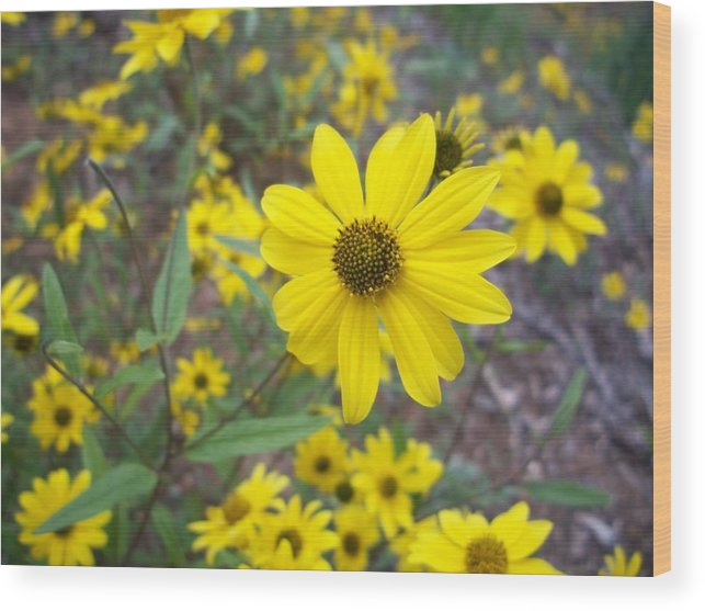 Yellow Flower Wood Print featuring the photograph Yellow Flower by Trenton Heckman