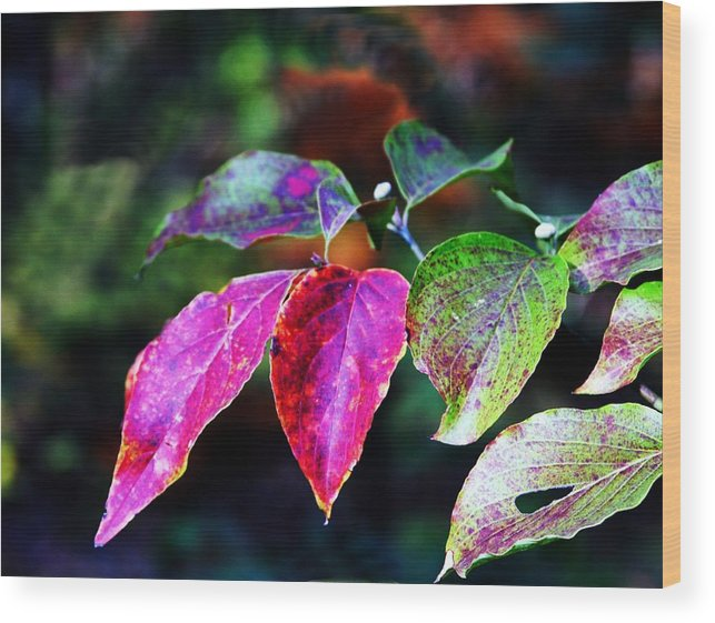 Fall Wood Print featuring the photograph Fall In Shades Of Purple by Kenna Westerman