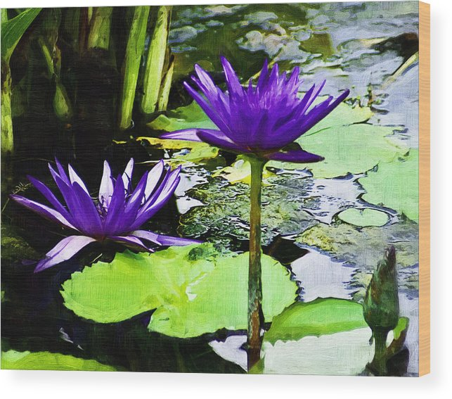 Flower Wood Print featuring the photograph Purple Water Lilies by D W Steinbarger