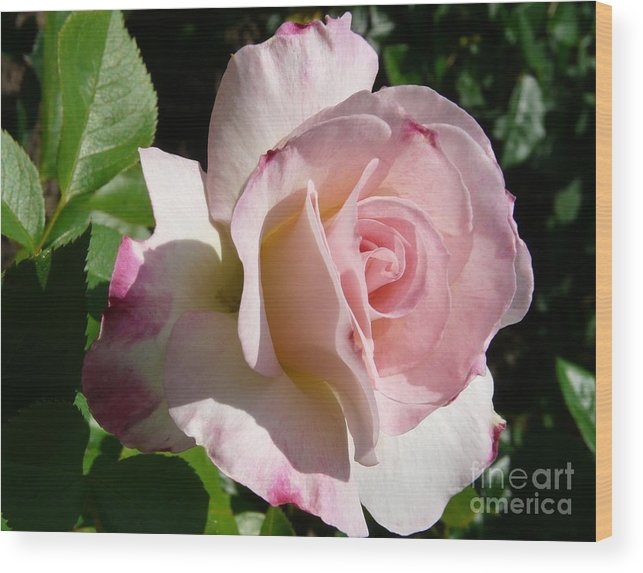 Rose Wood Print featuring the photograph Springtime Has Sprung by Kendall Eutemey