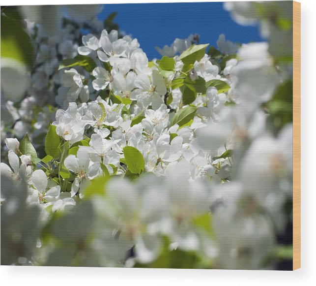 Pear Blossoms Wood Print featuring the photograph Glimpse Of Heaven by Randolph Fritz