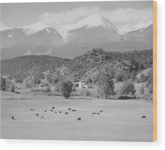 Landscape Wood Print featuring the photograph Mountain Meadow by Allan McConnell