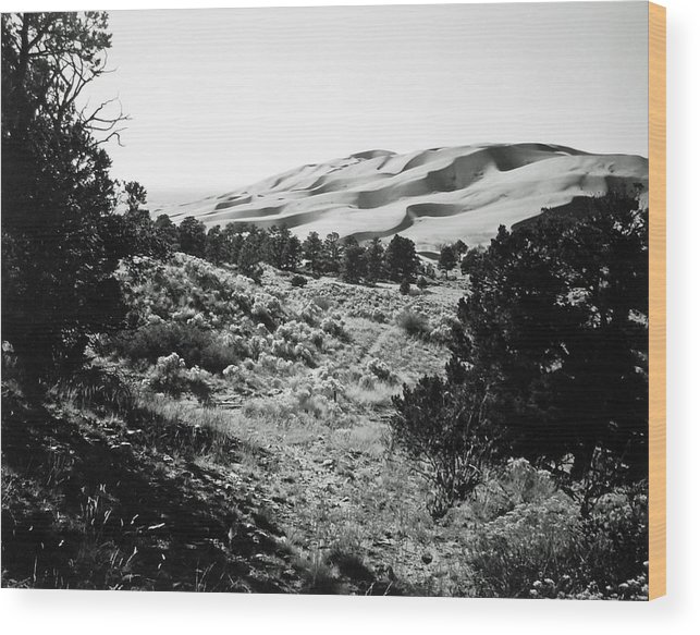 Landscape Wood Print featuring the photograph Path To The Dunes by Allan McConnell