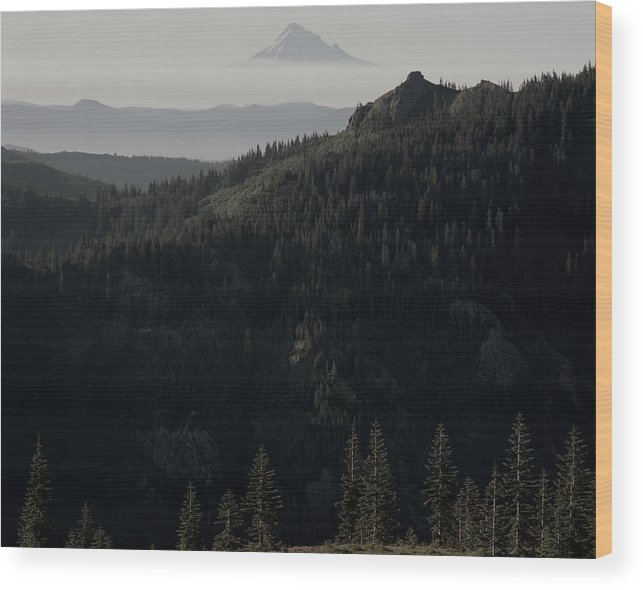 Nature Wood Print featuring the photograph Silverstar Trees by Benjamin Garvey