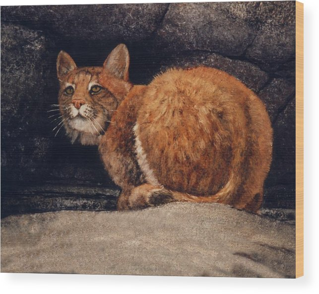 Wildlife Wood Print featuring the painting Bobcat On Ledge by Frank Wilson