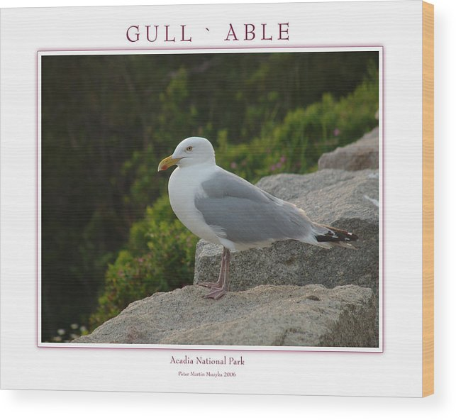 Landscape Wood Print featuring the photograph Gull Able by Peter Muzyka