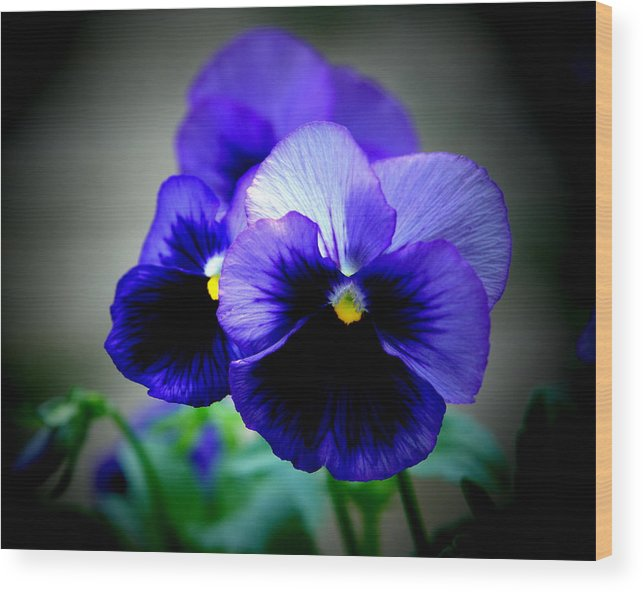 Pansy Wood Print featuring the photograph Purple Pansy - 8x10 by B Nelson