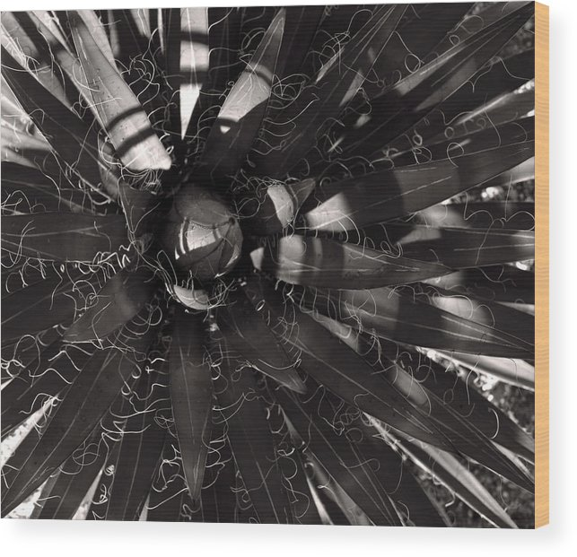Agave Wood Print featuring the photograph Agave by Steve Bisgrove