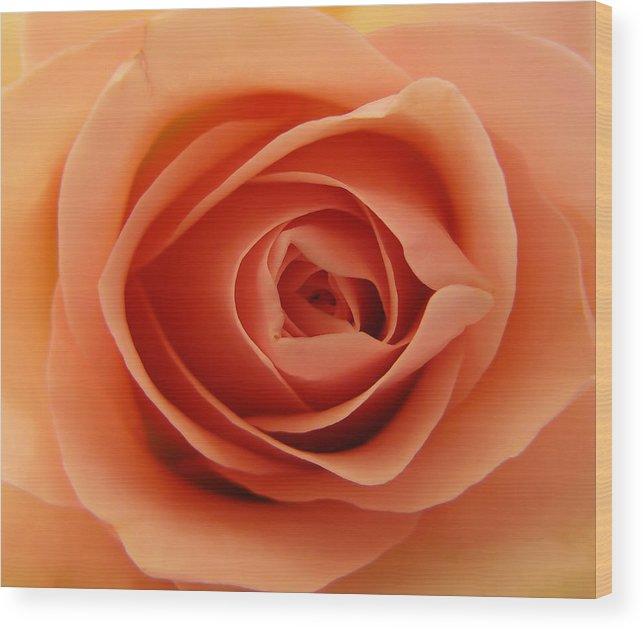 Rose Wood Print featuring the photograph Rose by Daniel Csoka