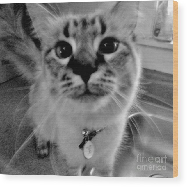 Cat Wood Print featuring the photograph Who Could Resist This Puss by Lori-Anne Fay