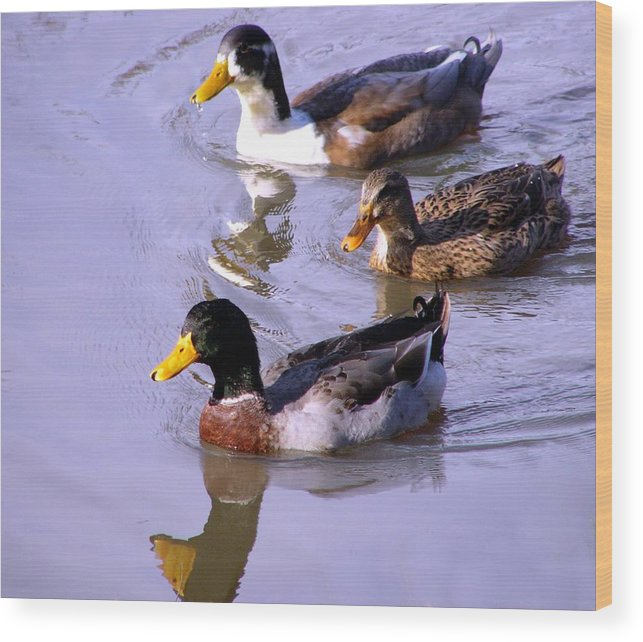 Duck Wood Print featuring the photograph Mallards by Kenna Westerman
