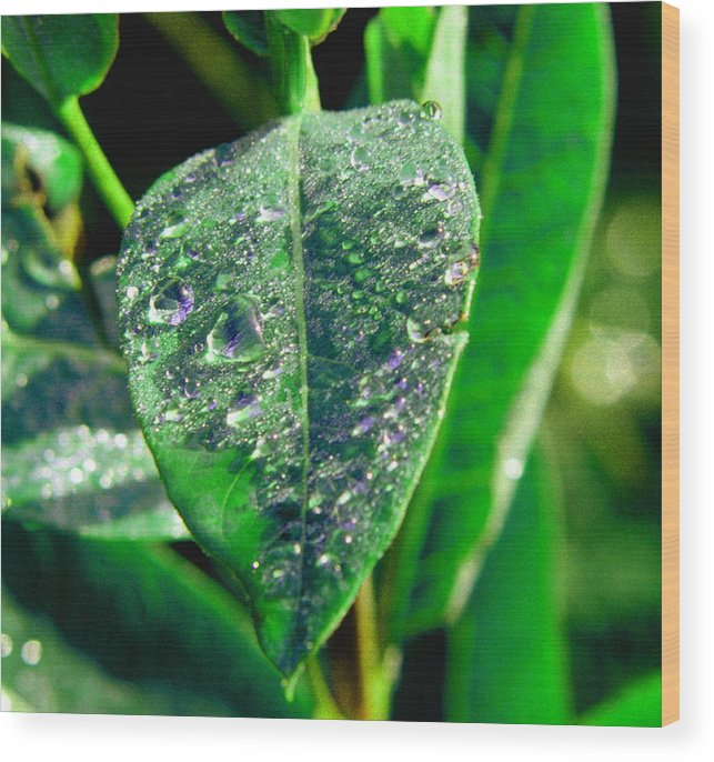 Leaf Wood Print featuring the photograph 022707-3 by Mike Davis