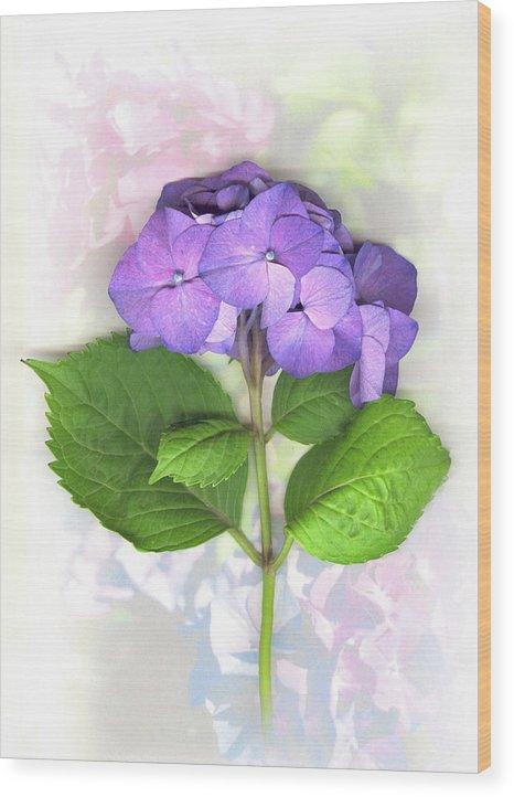 Purple Wood Print featuring the mixed media Purple Hydrangea by Sandi F Hutchins