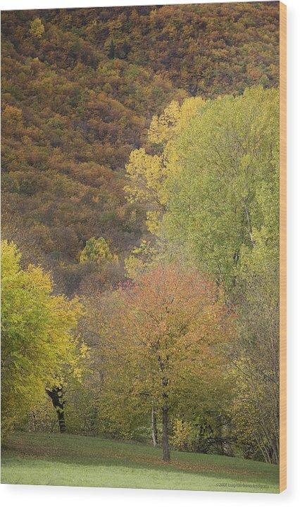 Autumn Wood Print featuring the photograph Autumn1 by Luigi Barbano BARBANO LLC