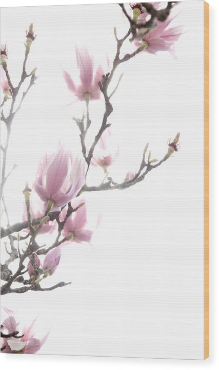 Pink Wood Print featuring the photograph Tulip Tree by Jessica Wakefield