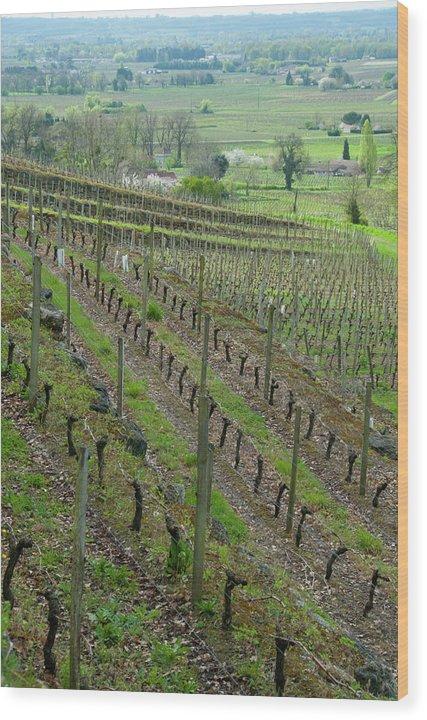 Bordeaux Wood Print featuring the photograph St. Emilion Bordeaux No. 8 by Kevin Bain