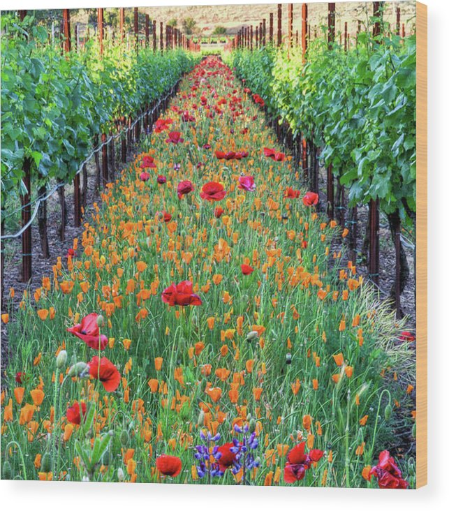 Tranquility Wood Print featuring the photograph Poppy Lined Vineyard by Rmb Images / Photography By Robert Bowman