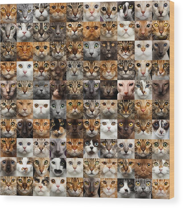 100 Wood Print featuring the photograph 100 Cat faces by Sergey Taran