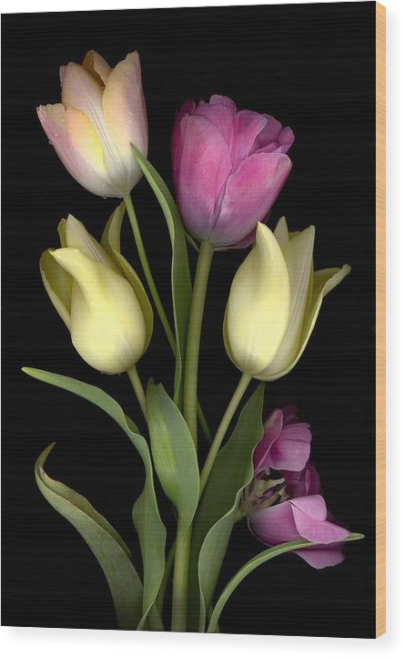 Tulips Wood Print featuring the digital art Bouquet of Tulips by Sandi F Hutchins
