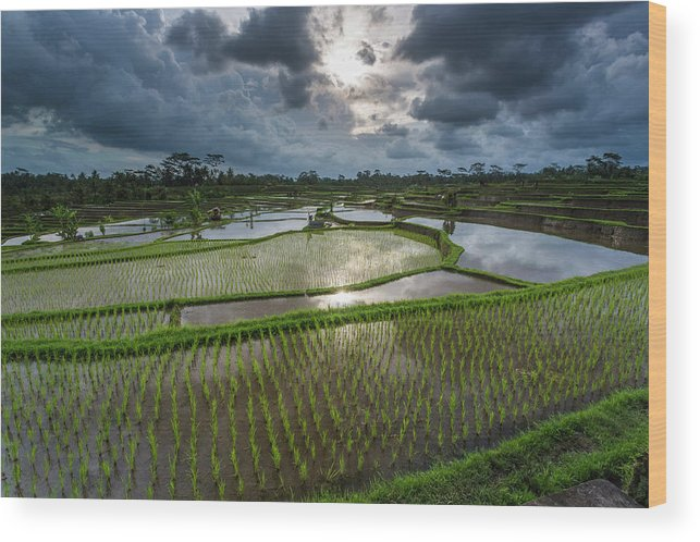 Tranquility Wood Print featuring the photograph Rice Terraces In Central Bali Indonesia by Gavriel Jecan