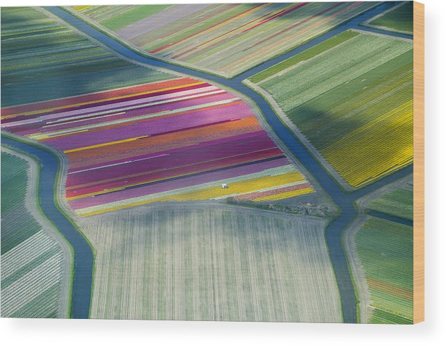 Curve Wood Print featuring the photograph Aerial View Of Flower Fields In Spring by Frans Sellies