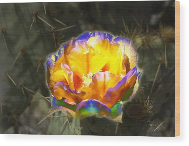 Prickly Pear Wood Print featuring the photograph Altered Yellow Prickly Pear Flower by Richard Henne