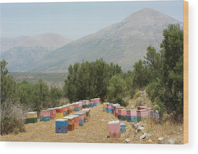 Allotment Wood Print featuring the photograph Beehives by David Parker/science Photo Library