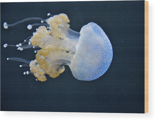 Underwater Wood Print featuring the photograph Blue And White Underwater Living Sea by Barry Winiker