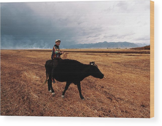 Scenics Wood Print featuring the photograph Boy Sitting Cow In Field by Touch The Word By Heart.