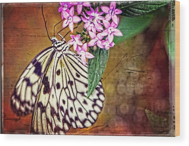 Butterfly Wood Print featuring the painting Butterfly Art - Hanging On - By Sharon Cummings by Sharon Cummings