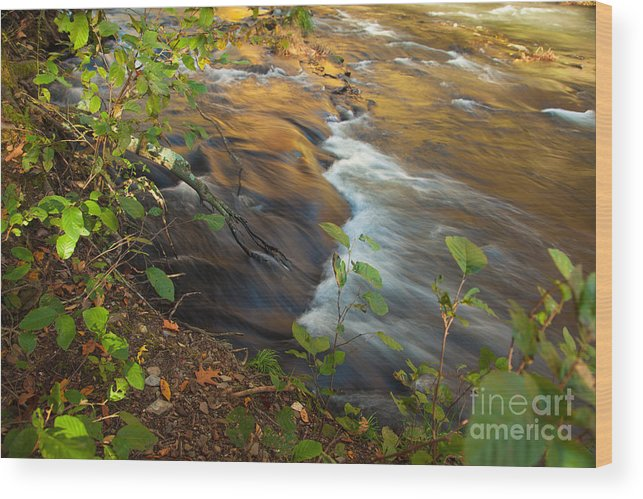 Landscape Wood Print featuring the photograph Cascade in the Fork River by Iris Greenwell