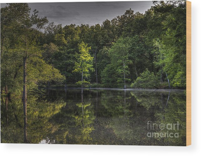 2014 Wood Print featuring the photograph Cypress At Dusk by Larry Braun