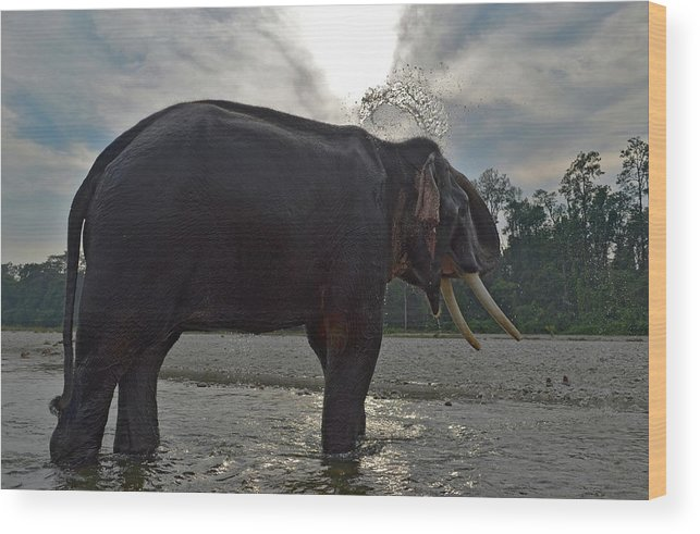 Animal Themes Wood Print featuring the photograph Elephant Taking A Shower On Its Own by Photograph By Anindya Sankar Dey