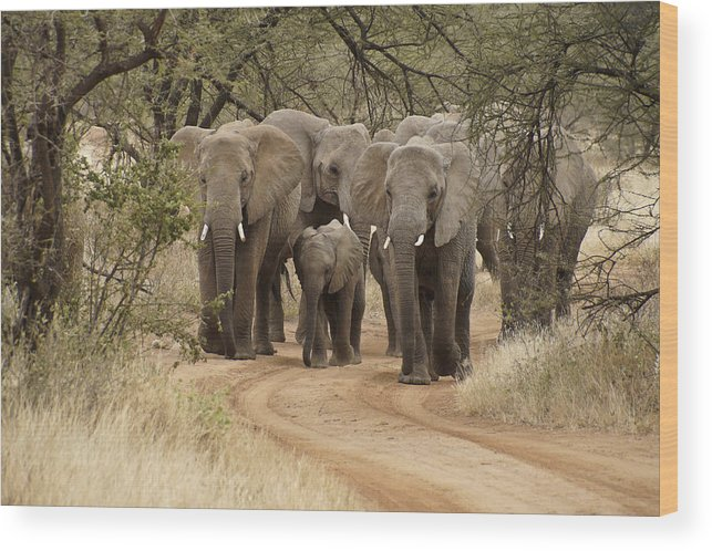 Africa Wood Print featuring the photograph Elephants Have the Right of Way by Michele Burgess