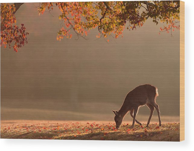 Deer Wood Print featuring the photograph First Autumn by Yoshinori Matsui