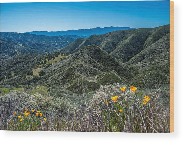 Mountains Wood Print featuring the photograph Flowers and Mountains by Paul Johnson
