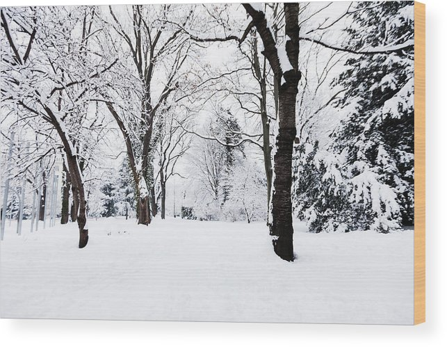 Snow Wood Print featuring the photograph Frozen Tree On A Snow Field by Lightkey