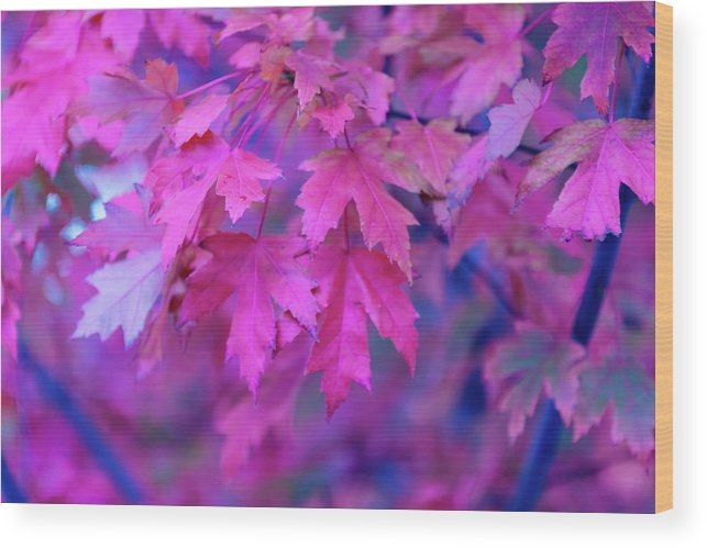 Tranquility Wood Print featuring the photograph Full Frame Of Maple Leaves In Pink And by Noelia Ramon - Tellinglife