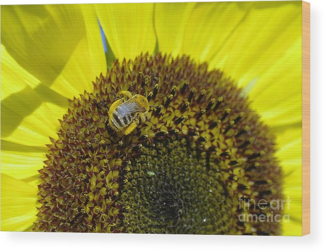 Bees Wood Print featuring the photograph Honeybee In A Sunflower by Jeff Swan