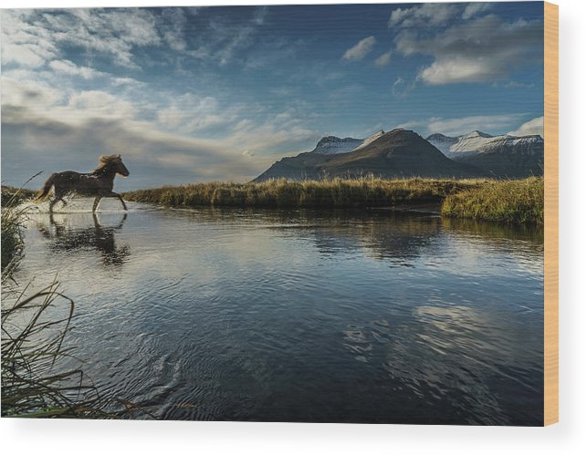 Majestic Wood Print featuring the photograph Horse Crossing A River, Iceland by Arctic-images